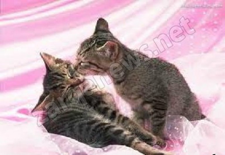ميو ميو ميو بدا شهر شباط شهر تزاوج القطط
