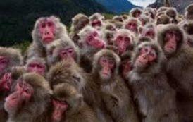 """شعبنا الفلسطيني يطالب بحقوق النسناس """" القرود """" باليوم العالمي لحقوق الانسان"""